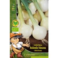 Foto de Cebolleta. Semillas Ecologicas. Cebolla Blanca Musona. 6 Gr