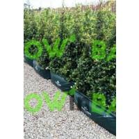 Foto de Macetas para Cercados O Setos Easy-Grow TM 100X30X30 Cm
