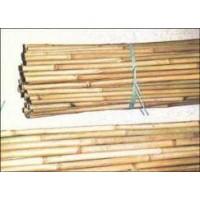 Foto de Tutores de Bambu