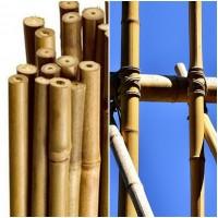 Foto de 100 Unidades. Tutor Caña de Bambú, Entutorar Plantas - Arboles. 60 Cm
