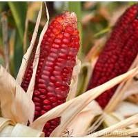 Foto de Maiz Rojo. ROUX Joro. Red Corn. 100 Gramos.
