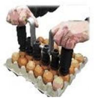 Foto de Marcadoras de Huevos Manuales