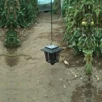 Foto de Trampa Ecológica para el Control de la Tuta Absoluta