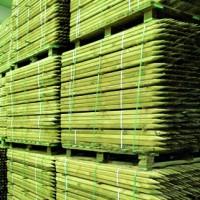 Foto de Tutores de Pino Tratado. 150 Cm