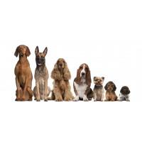 Foto de Advantix Antiparasitario con 4 Pipetas, Perros desde 10 a 25 Kilos de Bayer