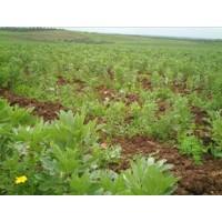 Foto de Abono Fertilizante Biológico /ecológico ( Líquido)