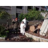 Foto de Limpieza,terrenos,corbella,663683536,poda,palmeras,pinos,arboles,desbroces,economicos,catalunya,