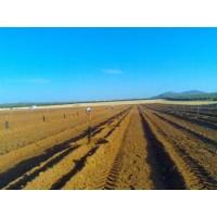 Foto de Plantaciones de Cítricos con Plantadora Guiada por Gps