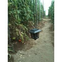 Foto de 12 Trampa Ecológica para el Control de la Tuta Absoluta