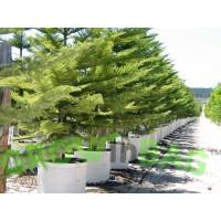 Foto de Bolsa de Cultivo Easy-Fill de 750 Lts