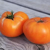 Foto de Tomate Gigante Naranja Breakfast Kellogg´s. 50 Semillas. Ecologico