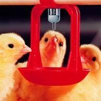 Bebederos De Tetina Para Aves Comederos Y Bebederos Para Aves