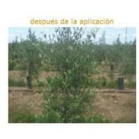 Foto de Fertilizante Foliar Winner Growth