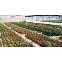 Foto de Plantas Forestales y para Restauración