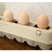Foto de Huevos para Incubar de Gallina Pita Pinta Abedul. 12 Unidades