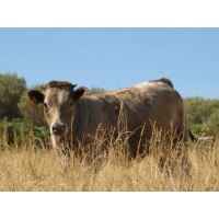Foto de Carne de Ternera de Alta Calidad