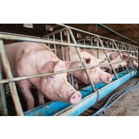 Foto de Venta de Granja de Cerdos Nueva a Estrenar en el Bayo (Ejea)
