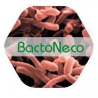 Foto de Bactoneco K Solubilizador de  Potasio 1 L
