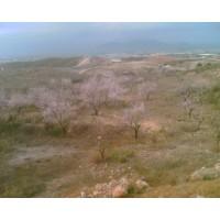 Foto de Venta de 45.000 M de Terreno con Regadio y Almacén
