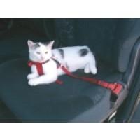 Foto de Cinturon de Seguridad para Gatos