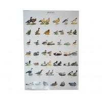 Foto de Poster Faisanes I