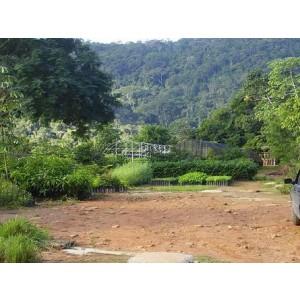 Foto de Reforestación de Parques