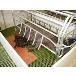 Foto de Placas de Calefacción  para Granjas