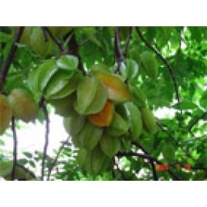 Foto de Fruta Fresca de Carambola y Rambután
