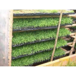 Foto de Capacitacion para Cultivar Forraje Hidroponico para Alimentar Ganado