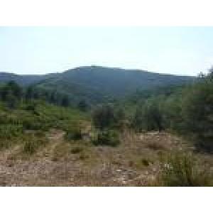 Foto de Proyectos Forestales; Gestión de Biomasa y Prevención de Incendios.