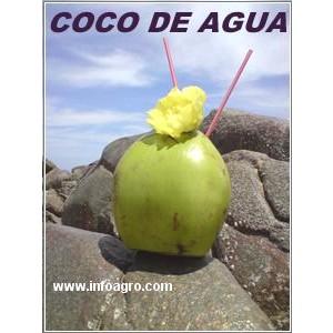 Foto de Coco Verde