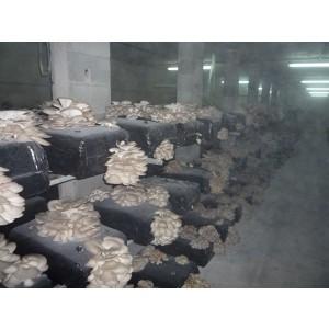 Foto de Setas Simarro, Vende Alpacas de Setas
