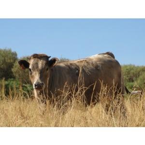 Foto de Carne Ecológica de Ternera