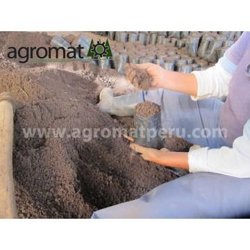Bolsas para vivero plantones plantas e injertos for Organizacion de viveros