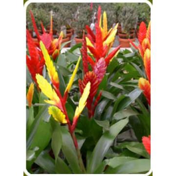 Plantas de interior exterior y flor artificial plantas for Plantas ornamentales de exterior