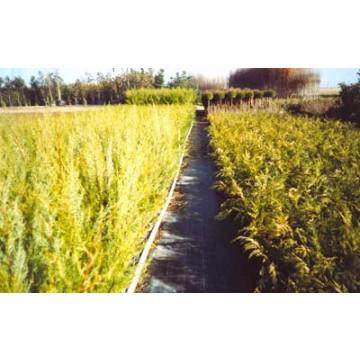 Plantas ornamentales plantones e injertos 14375 for Organizacion de viveros