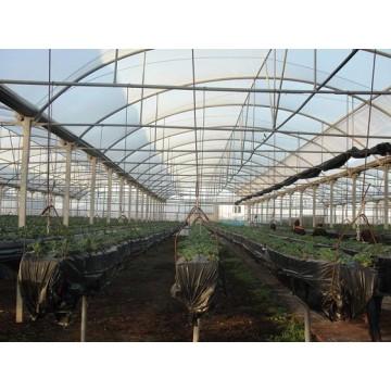 Fabricante de invernaderos nuevos y segunda mano - Estructuras invernaderos segunda mano ...