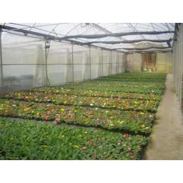 Vivero de producci n ornamental plantas de interior for Proyecto vivero ornamental