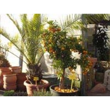 Vivero de producci n ornamental plantas de interior for Organizacion de viveros