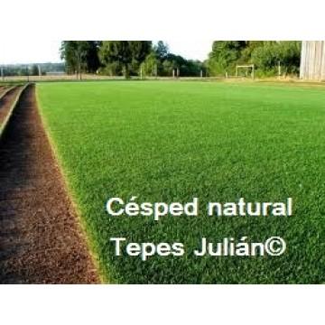 C sped natural en rollos para zaragoza c sped natural - Cesped natural ...