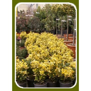 Plantas De Interior, Exterior Y Flor Artificial | Plantas de ...