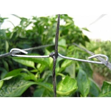 Sistemas para el tutorado de la planta en invernaderos - Tutores para tomates ...