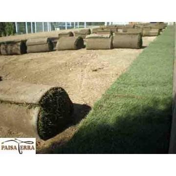 ms imgenes de diseo obra y construccin de jardines