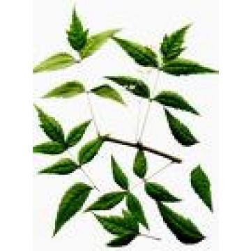 Semillas de neem y vivero semillas ornamentales y de for Organizacion de viveros
