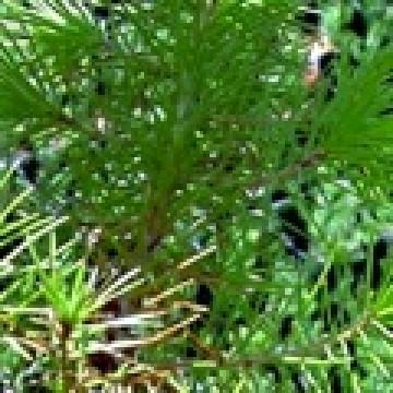 Sustrato para vivero forestal sustratos 3012291 for Organizacion de viveros