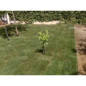 Jardineria Y Paisajismo Ingenier A 3014977 Agroterra