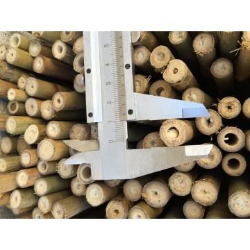 Foto de Tutor de Bambú de 105 Cm. 12/14 Mm