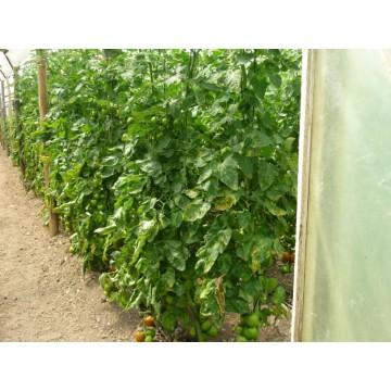 ms imgenes de abono orgnico compost