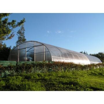 Invernadero tipo tunel invernaderos y viveros 3040126 for Vivero e invernadero