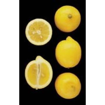 Limonero eureka en maceta de 17 cent metros c tricos y - Limonero en maceta ...